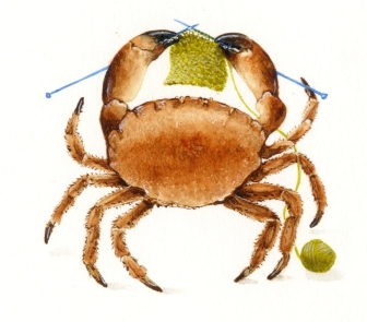 Crab with knitting