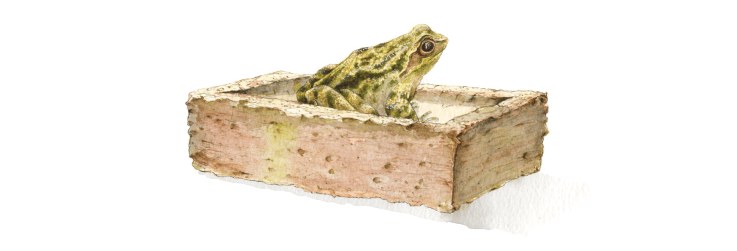 the-frog-in-a-brick-mounted-non-standard-aperture-size-20.2cm-x-12.5cm-mounted-outside-edge-27.9cm-x-20.3cm.png